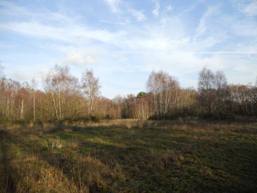 common-land
